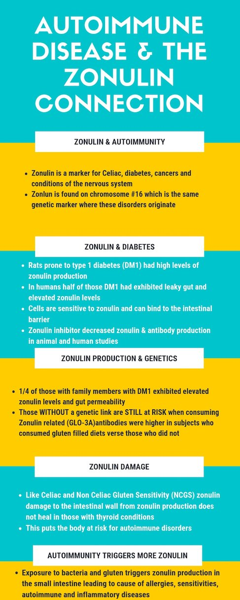 Infographic of Autoimmune Disease & The Zonulin Connection| Thyroid Nutrition Educators