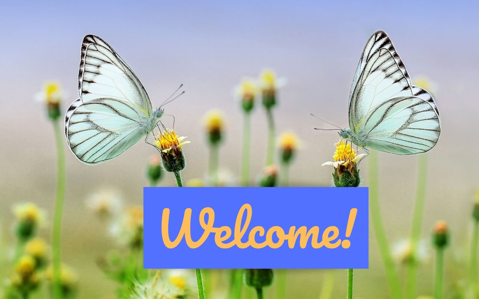 "Photo of 2 Butterflies and the Word ""welcome""