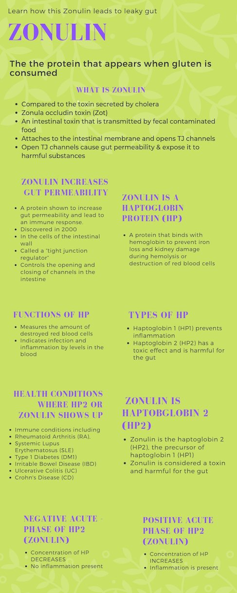 Infographic on Zonulin & Leaky Gut| Thyroid Nutrition Educators
