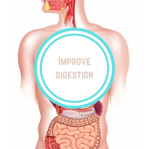 Thyroid resources with theImprove Digestion against an outline of the human digestive tract | Thyroid Nutrition Educators